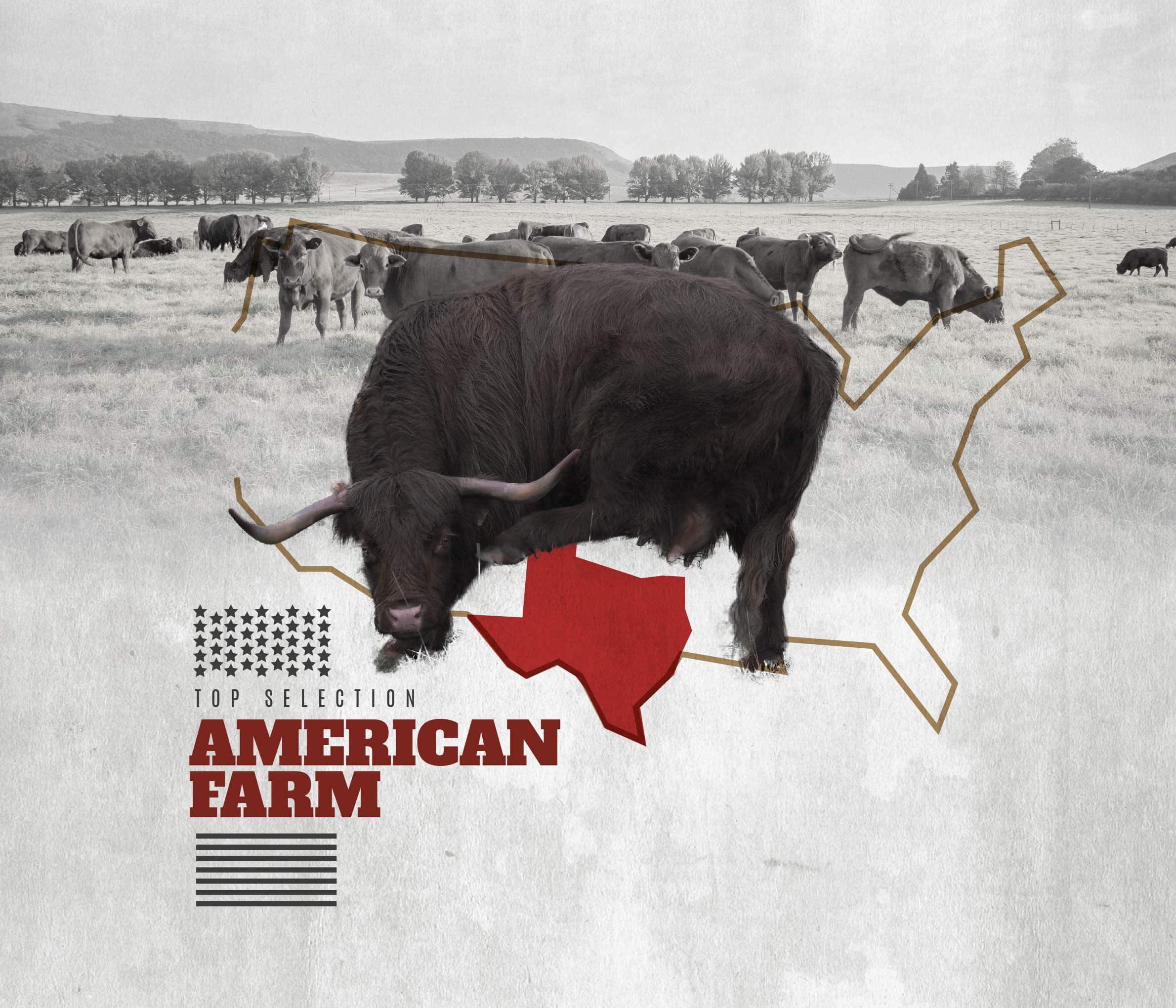 Top Selection - American Farm